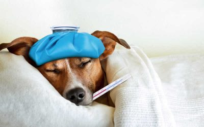 Does your pet need to see a vet? Is it urgent?