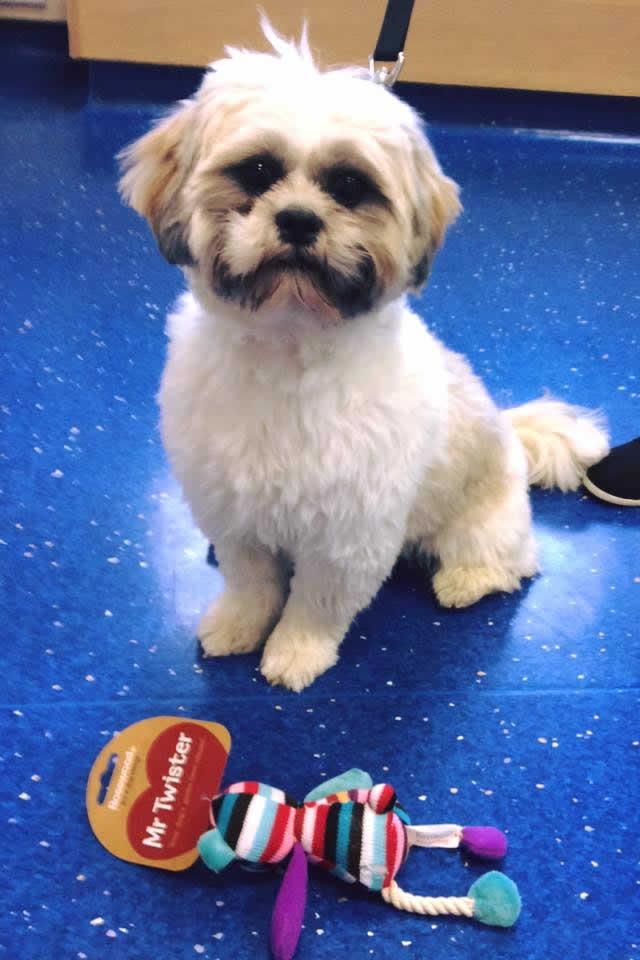 Dog at Thameswood Vets