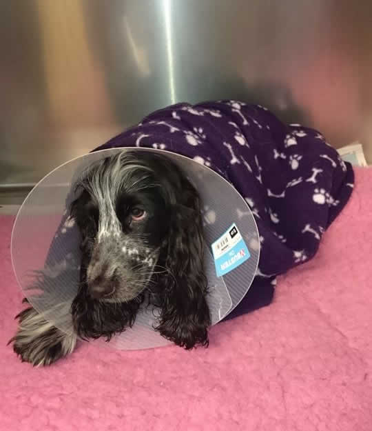 dog recovering in kennel at Thameswood Vets