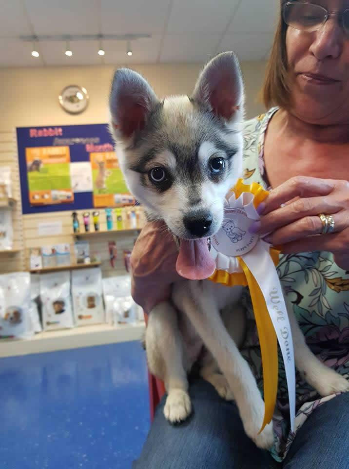puppies at Thameswood vets