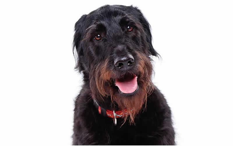 dog having k-laser treatment at Thameswood Vets