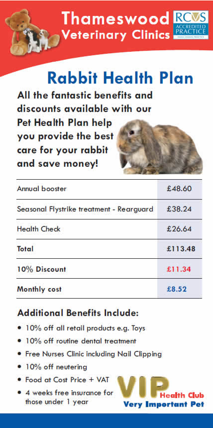 Rabbit offer at Thameswood Vets