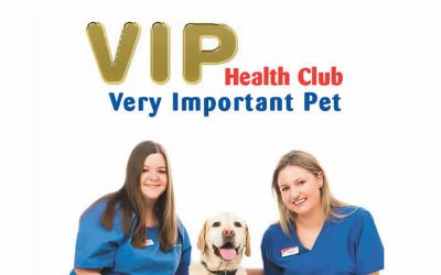 Our VIP Health Club