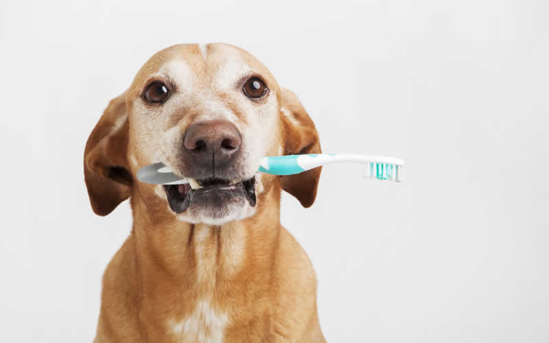 toothbrush in dog's mouth at Thameswood Vets