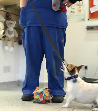nurse at Thameswood Vet